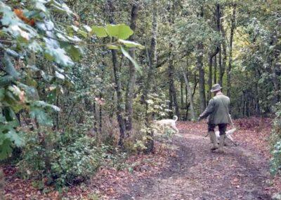 Esperienze sensoriali: ricerca del tartufo nei boschi